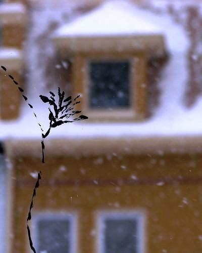 Domku, snow flower