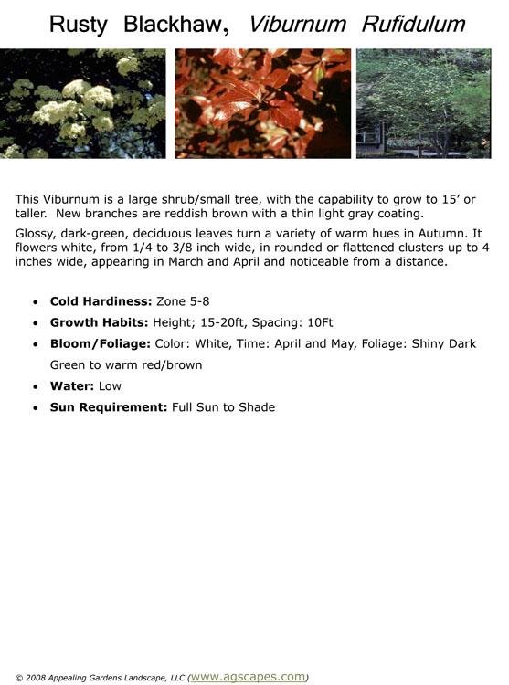 Rusty Blackhaw Viburnum