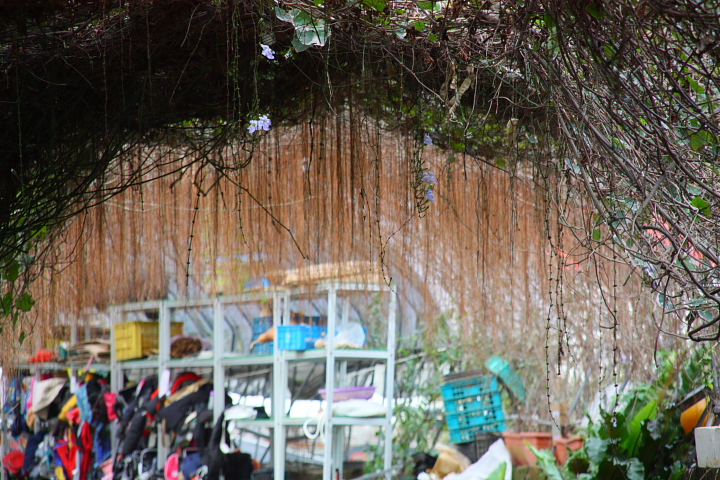 三芝番婆林花園(花卉、醬菜)0041