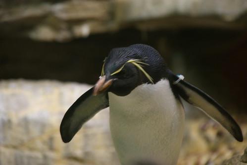 Shedd Aquarium 2010