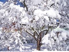 2010-02-06 0131 Winter in Indiana - Holliday Park, Indianapolis Winter at Holliday Park, Indianapolis Indiana along the banks of the White River.   Winter Žėima Hibierno Ҡыш Kathagkót Mùa đông Ivier Talv ฤดูหนาว Кыш Зима Gyş Kış Зимистон ฤดูหนาว மாரிகாலம் (Badger 23 / jezevec) Tags: schnee trees winter snow tree forest log woods photos timber indianapolis hiver nieve sneeuw snowstorm træ indiana boom neve árbol invierno neige 木 wonderland albero inverno arbre zima árvore 雪 冬 strom baum träd 2010 puno koks 樹 drzewo зима 나무 jezevec mti 겨울 눈 arbore χιόνι снежок вал δέντρο χειμώνασ badger23