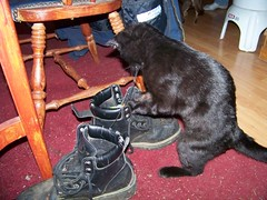 Jake playing with his toy in a boot