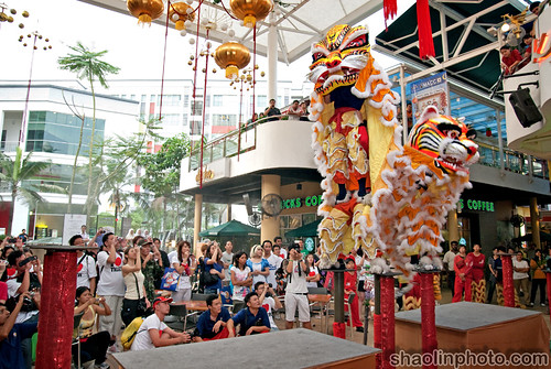 Tiger Run Lion Dance
