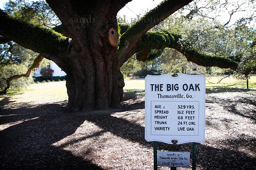 . the big oak stats .