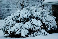 Snow-4849