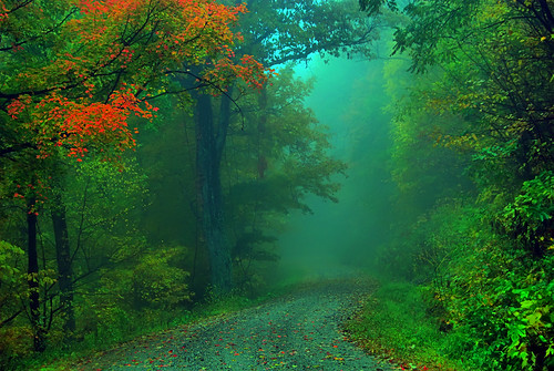 Foggy Fall Road by LynchburgVirginia.