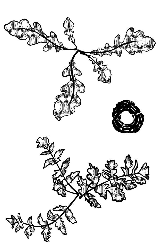 rootleaves