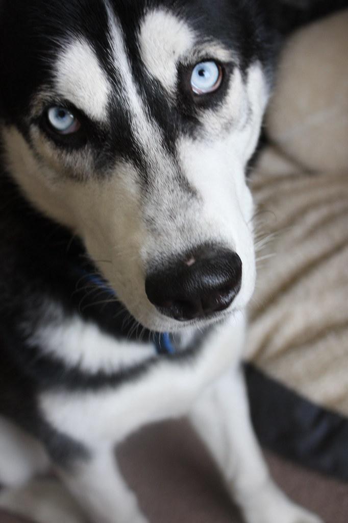 mi perro