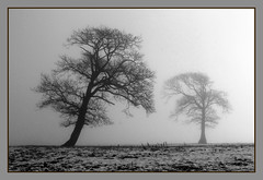 Misty morning (Chilsworthy Bob) Tags: morning winter mist tree field silhouette landscape blackwhite bob devon lonely frostymorning 2010 chilsworthy