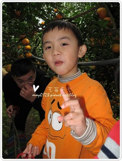 關西採草莓橘子牛欄河2010.02.20-33