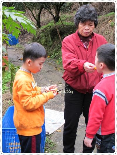 關西採草莓橘子牛欄河2010.02.20-18