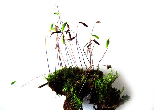found moss