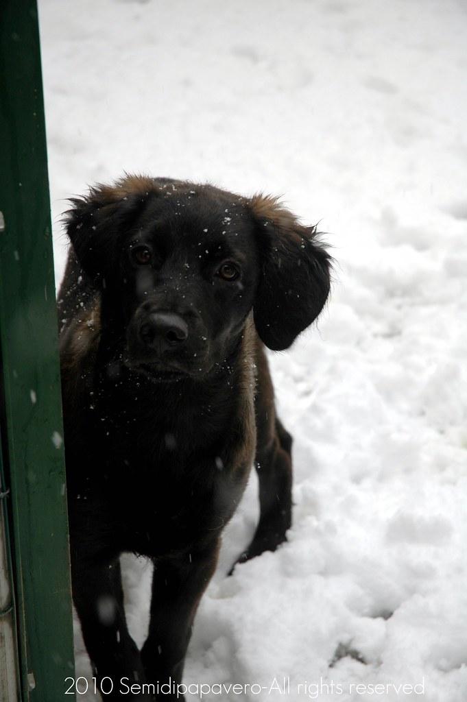 Baloo e l'ultima nevicata