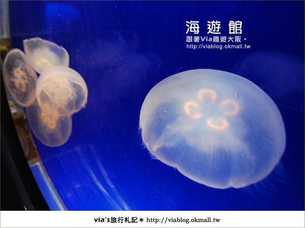 【via關西冬遊記】世界最大極的水族館~大阪海遊館26