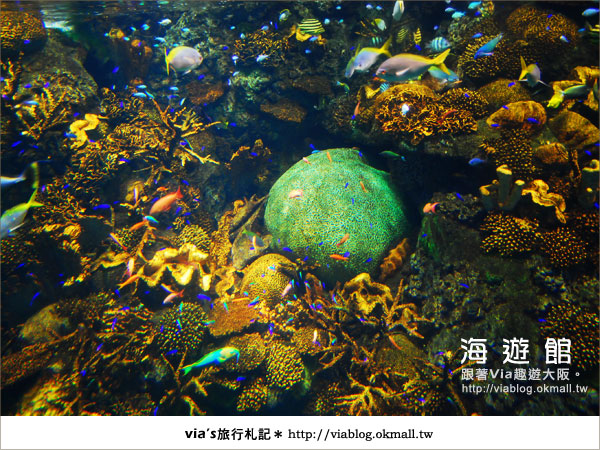 【via關西冬遊記】世界最大極的水族館~大阪海遊館12