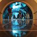 Dubai Mall Aquarium Entrance