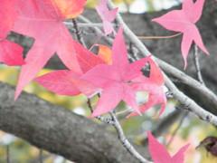 tons de outono V