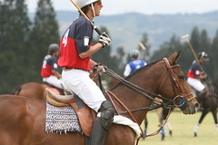 POLO (rdlt) Tags: horses horse sports sport club canon caballos eos colombia shot action match polo equestrian equine mallets 30d