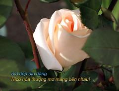 IMG_7023-1 (luuminhphuong) Tags: mung chuc