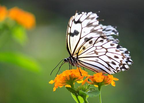 Butterfly at Butterfly Garden - 7