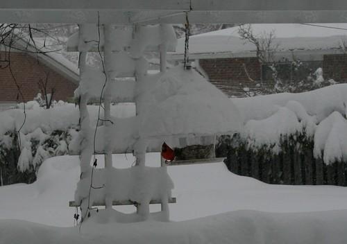 Cardinal on snowy feeder