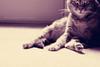 Furry Friday... (Katie.M ♥) Tags: 50mm zoey sittinginthesun 450d canonrebelxsi whilecleaning perfectpurplesaturday florabellaactions softurbanaction warmpurpletones shesalotsweeterthansheseems katiemarshallphotography