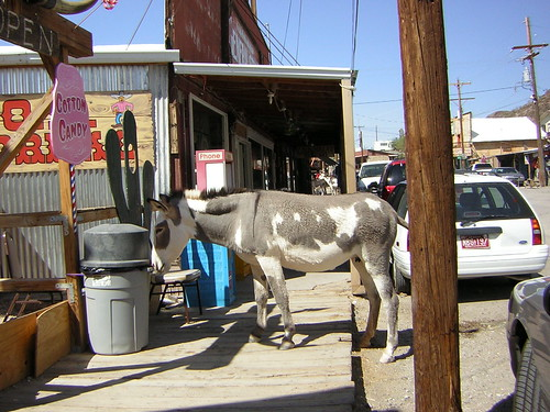Oatman, Arizona: wild burros
