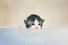 Goodmorning, Dashki (Fatemah.) Tags: light pets animal canon photo flickr natural little kitty dashki