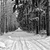 winter view II (GdeB fotografeert) Tags: drenthe borger ees boswandeling winterbeauty blackwhitephotos landvanbartje platinumheartaward wintersbeeld platinumbestshot gdebfotografeert januari2010