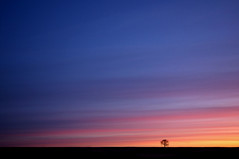 Big Sky, Little Tree (Explore FP) (Chris Beesley) Tags: pink red orange sun yellow sunrise interesting purple cheshire explore 37 fp sigma1020mm explored explorefrontpage explorefp pentaxk100dsuper