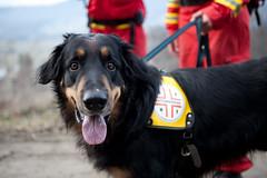 Rettungshunde-Training