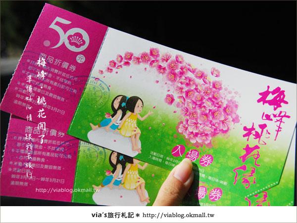 【梅峰農場桃花緣】最美的桃花隧道,就在南投梅峰這裡~(上)2