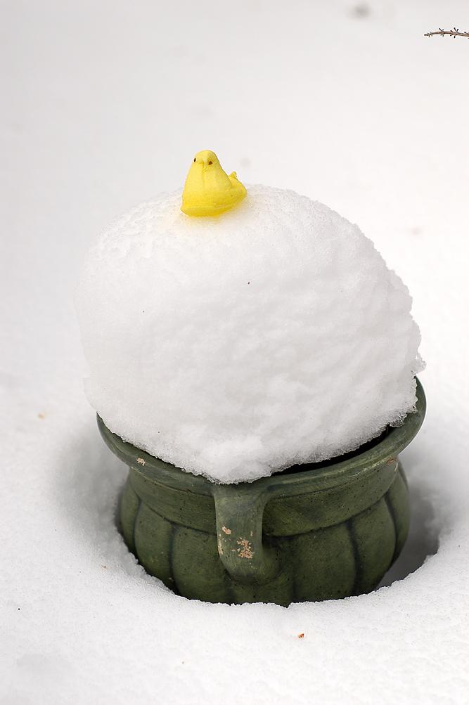 snowpeep2