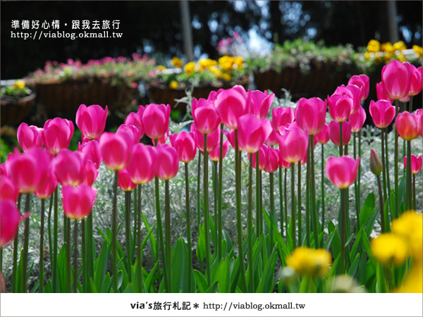 【梅峰農場】不止桃花美!梅峰農場賞花趣~(下)12