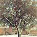 80/365: Snowy Spring