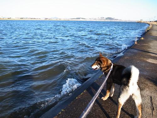 風と犬と波と