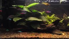 Aften foran akvariet6 (Akvarie) Tags: fisk akvarie