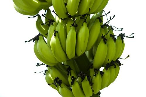 fruits high in potassium patterson fruit farm