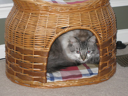Illy in the new cat house