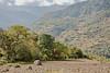 Arunachal Pradesh : landscape between Dirang and Tawang #1 (foto_morgana) Tags: india landscape asia scenic mountainous arunachalpradesh monpa dirang westkameng dirangcircle nyukmadong