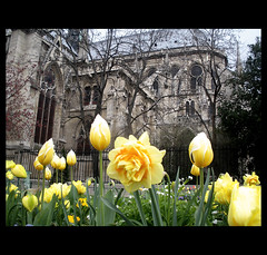 Notre Dame...point of view !! (Martha MGR -I'll be out for two weeks.) Tags: urban paris flower garden cathedral jardin vernissage ville mmgr marthamgr 4msphotographicdream 2msroyalstation marthamariagrabnerraymundo marthamgraymundo
