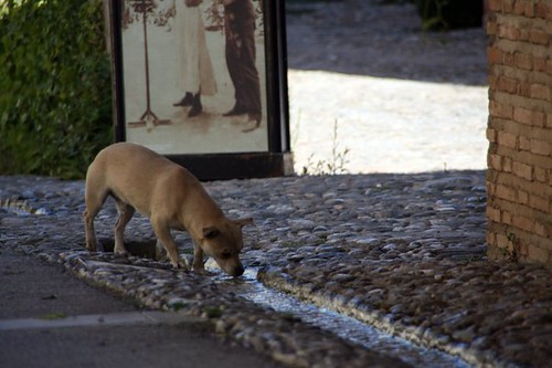 El Perro de Las Piedras