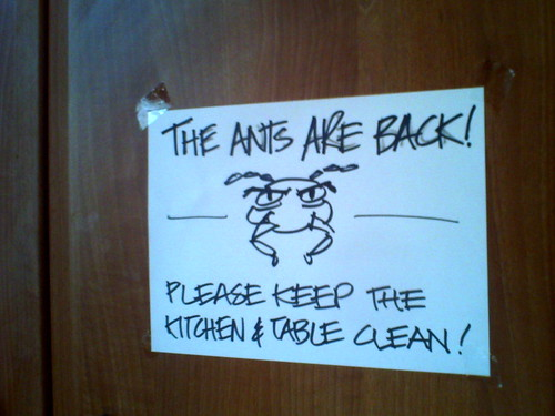 thanks ants