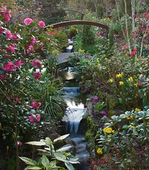 Our garden stream at sunrise (spring) (Four Seasons Garden) Tags: uk morning bridge pink flowers red england urban plants white west flower colour green english water beautiful leaves yellow marie stone gardens silver garden four early spring stream all colours open seasons tulips picture peaceful tony ornament national fourseasons daffodil april birch camellia scheme urbangarden primula staffordshire newton himalayan walsall midlands betula blackcountry ngs nationalgardenscheme yorkstone jacquemonti multistemmed fourseasonsgarden utilis jacquemontii wonderfulworldofflowers charityopendays yahoo:yourpictures=waterv2