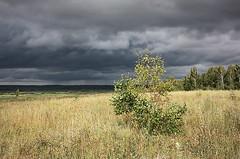 135 (AnkhaiStenn) Tags: sunset sky cloud sun white mountain tree grass dark bush russia ukraine russian ukrainian steppe