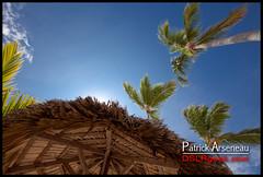 I want to go back :( (Patrick Arseneau) Tags: travel blue sky sun tree beach dominican republic catalonia palm resort punta caribbean cana bavaro