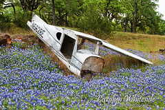 Last Stop for Bluebonnets