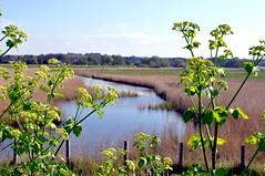 marsh at Brancaster