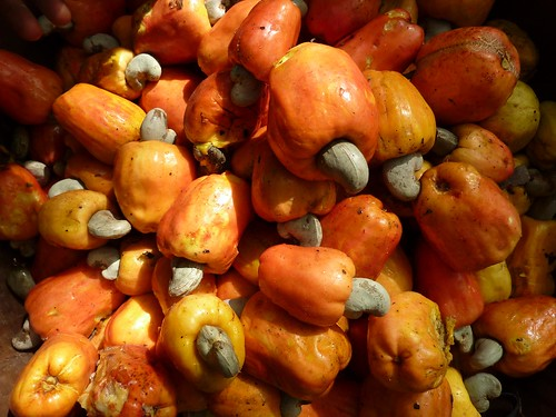 Cashew fruits