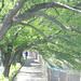 町田樹 画像76